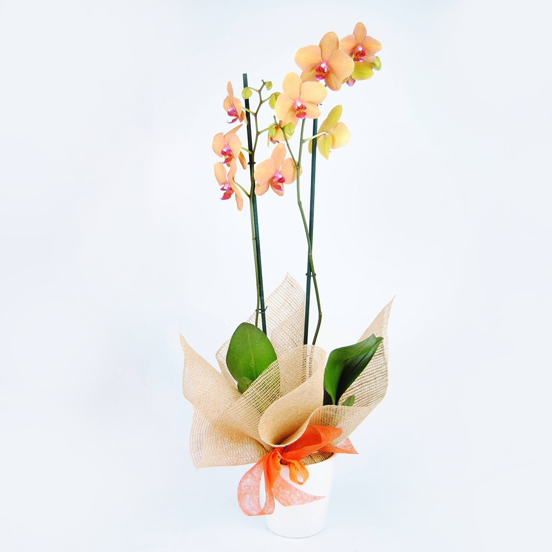 Comprar Orquídea a domicilio - Originalflor