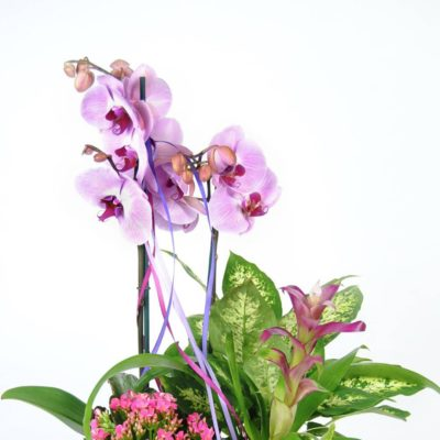 Diseño Floral Con Orquídea Rosa, Kalancohe, Difembaquia, Guzmania Fucsia, Y Caja De Madera