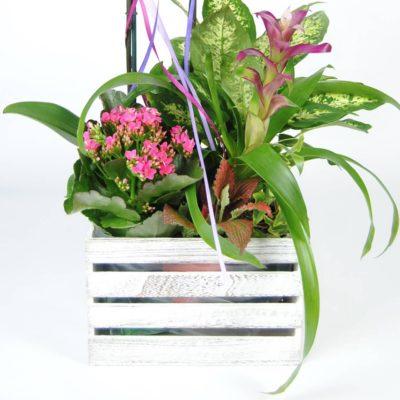 Composición Floral Con Orquídea Rosa, Kalancohe, Difembaquia, Guzmania Fucsia, Y Caja De Madera