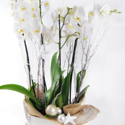 2 Orquídeas Blancas Con Cesta