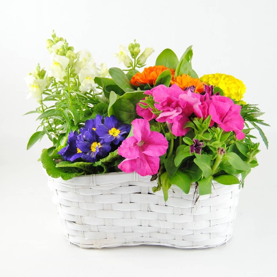 Composición Edén - Plantas de Interior para regalar