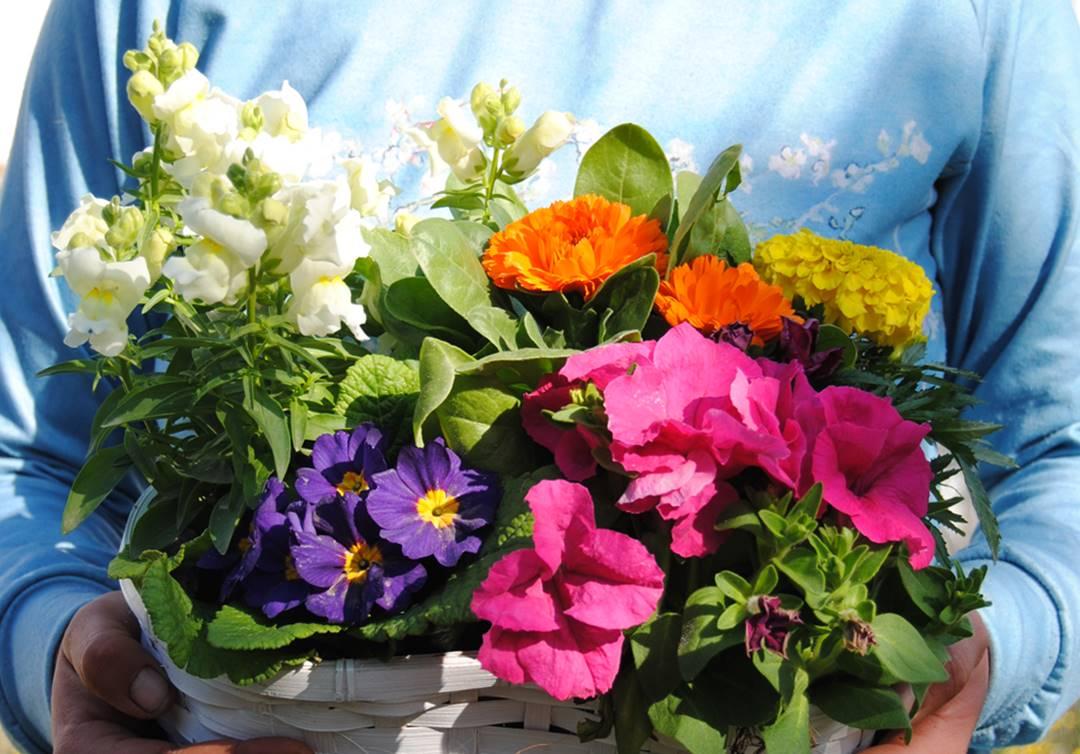 Envío de plantas de interior variadas