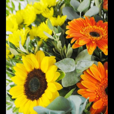 Flores A Domicilio - Margaritas Gerberas Girasoles